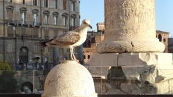 2013 Rome, a bird near Traian Column