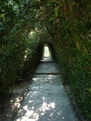 2007 Balcic, tree tunnel