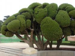 2006 Madrid, a tree